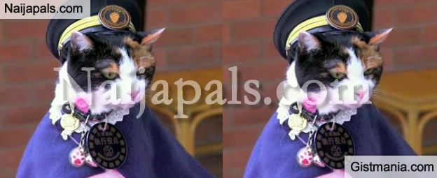 End Of Days: 3000 People Attend Funeral Of Cat They Now Call A godess [Video]