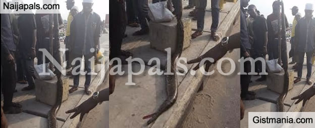 A Huge Snake Was Captured And Killed At Agboju Area Of Lagos State [PHOTO]