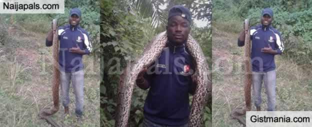 See The Huge Python a Hunter Killed In Osogbo Osun State