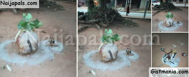 ANAMBRA ELECTION: Juju Planted At Polling Unit to Stop Voting (Photos)