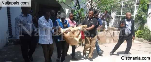 Lagos Operatives Task Force Succeed In Removing Lion Haboured By Indian In Victoria Island
