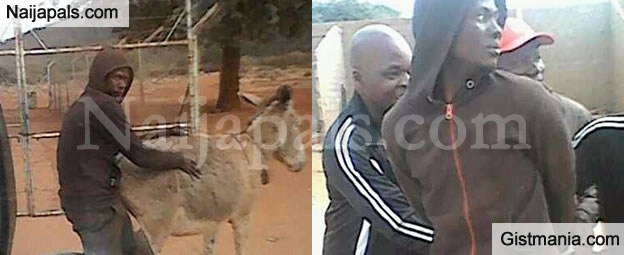 Kongi Things! Man Arrested While Publicly Bonking A Donkey In Broad Day Light (Photos)