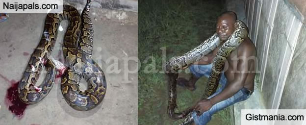 OMG! See Giant Python Killed By A Man In His Compound Around Midnight (PHOTOS)