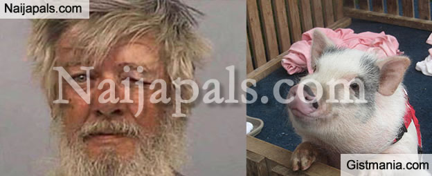 Man Arrested for Molesting a Pig in a Public Toilet in Walmart (PHOTO)