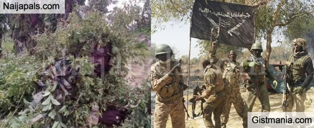 Photos Of Nigerian Troops Camouflaged As Trees In Sambisa Forest