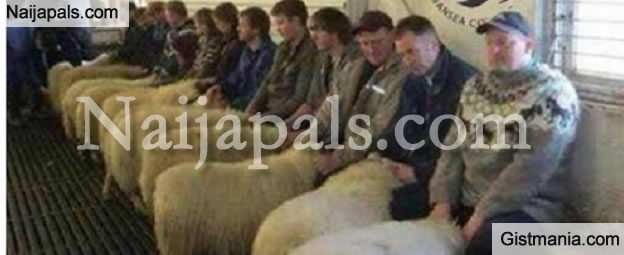 "SMH! 3 Brothers Arrested in Wales for Running a ""Sheep Brothel"" Where People Sleep With Animals"