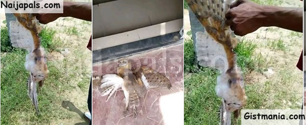 "Members Kill ""Strange"" Bird Which Flew Into Their Locked Church In Delta (Photos)"