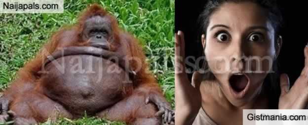 Weird!! Zoo keeper Impregnate's Female Orangutan, Says It Was Consensual
